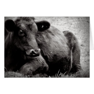 Angus Beef Steer Photographic Portrait Card