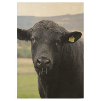 Angus black beef bull wood poster