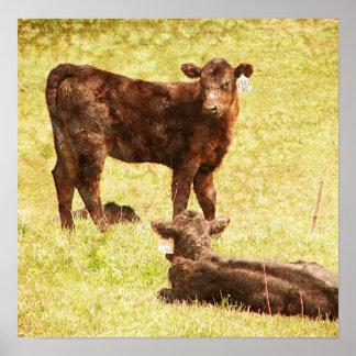 Angus Calves at Pasture Poster