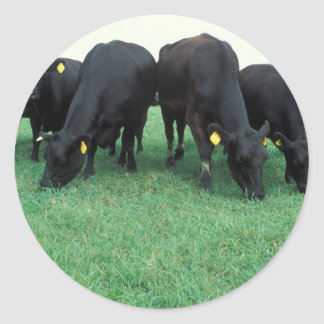 Angus cattle classic round sticker