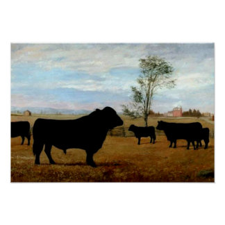 Angus cattle on the farm poster