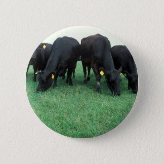 Angus cattle pinback button