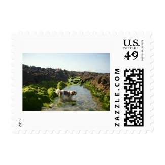 Angus in Ireland Stamp