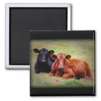 Angus Love - Pair of Cattle Side by Side 2 Inch Square Magnet