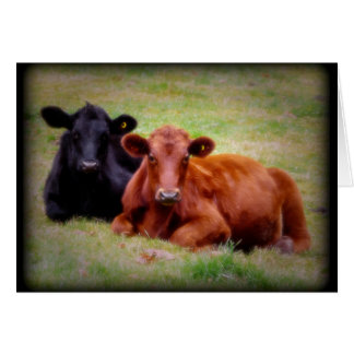 Angus Love - Pair of Cattle Side by Side Card