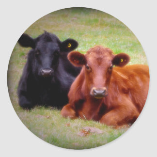 Angus Love - Pair of Cattle Side by Side Round Stickers