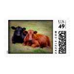 Angus Love - Two Cows Postage Stamp