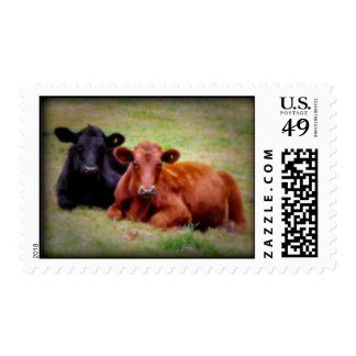 Angus Love - Two Cows Postage Stamps