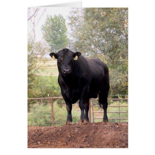 Angus negro Bull Tarjeta De Felicitación