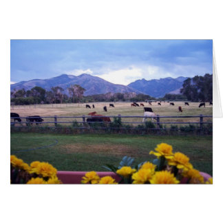 Angus On Pasture Card