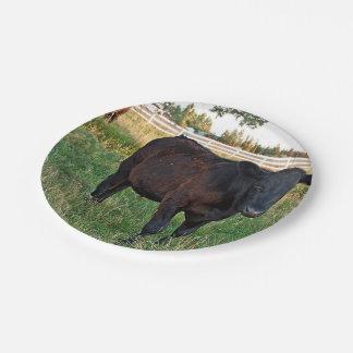 Angus steer in green fields paper plate