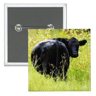 Angus Steer in Tall Yellow Grass 2 Inch Square Button