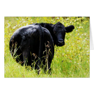 Angus Steer in Tall Yellow Grass Card
