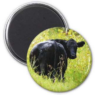 Angus Steer in Tall Yellow Grass Fridge Magnet