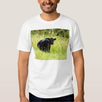 Angus Steer in Tall Yellow Grass Shirt