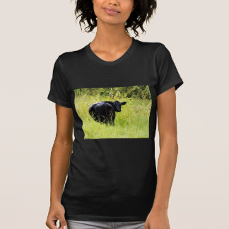 Angus Steer in Tall Yellow Grass T-shirts