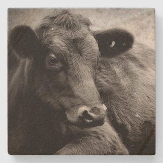 Angus X Steer  Black and White Stone Coaster