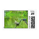 anhinga and babies postage