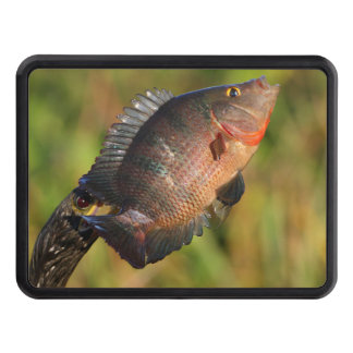 anhinga and colorful fish hitch cover