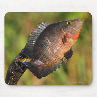 Anhinga and Fish Mouse Pad