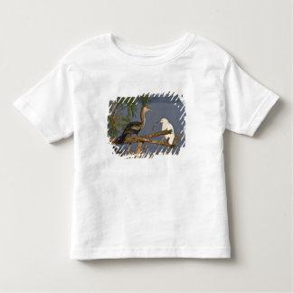 Anhinga (Anhinga anhinga) also known as snake Shirt