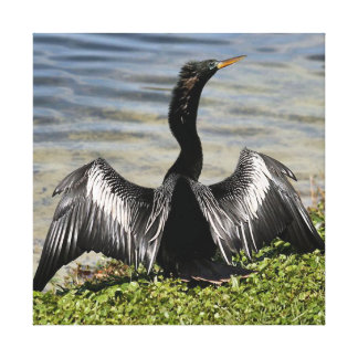Anhinga Bird Canvas Print