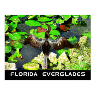 Anhinga bird, Everglades National Park, FL Postcard