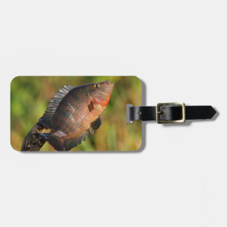 anhinga displaying a colorful fish bag tag