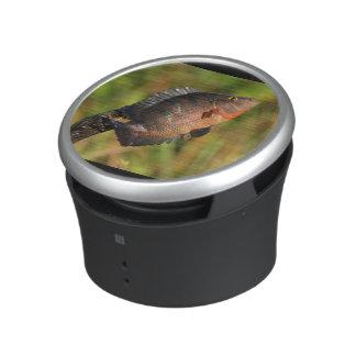 anhinga displaying a colorful fish bluetooth speaker