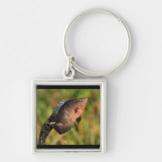 anhinga displaying a colorful fish Silver-Colored square keychain