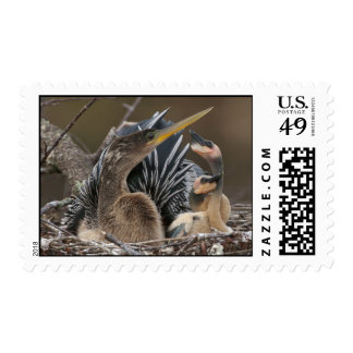 Anhinga...Living in the Sticks Postage Stamps