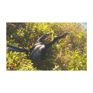 Anhinga on alert gallery wrapped canvas