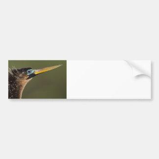 Anhinga Portrait Car Bumper Sticker
