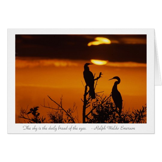 Anhingas at Sunrise Card