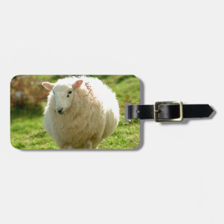 Anillo de las ovejas de Kerry Etiquetas Maleta