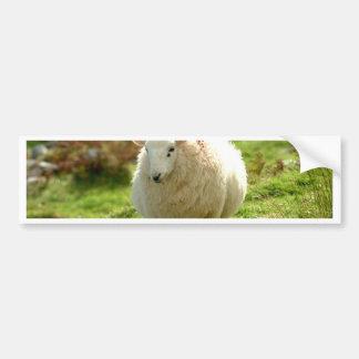 Anillo de las ovejas de Kerry Pegatina Para Auto