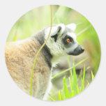 Anillo del Pegatina-Lemur atado