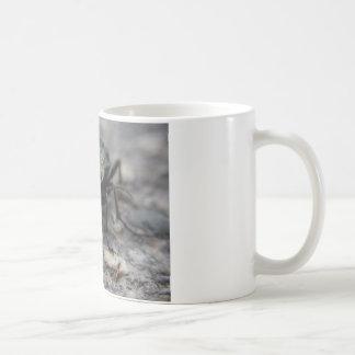 animal-3411 taza de café