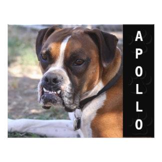 Animal Actors Comp Card Headshot