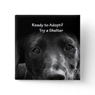 Animal adoption button button