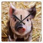 Animal adorable lindo del cerdo del cochinillo del relojes