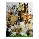 Animal Allsorts Postcard