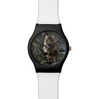 Animal-amante del Tabby del gato de Coon de Maine Reloj De Mano