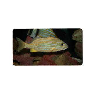 animal amarillo rayado azul del agua salada de los etiqueta de dirección