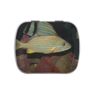 animal amarillo rayado azul del agua salada de los jarrones de caramelos