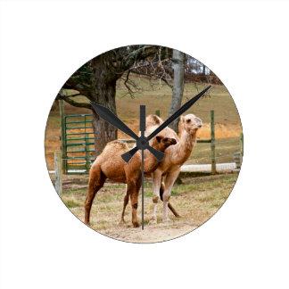 Animal animal del desierto del camello de la madre reloj de pared