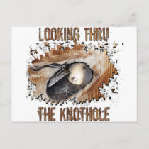 Animal Art Goat Picture Angora Goat Postcard