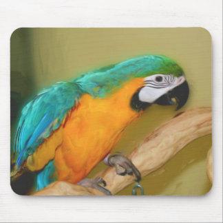 Animal azul Mousepad de la pintura del loro del Ma Tapete De Ratones