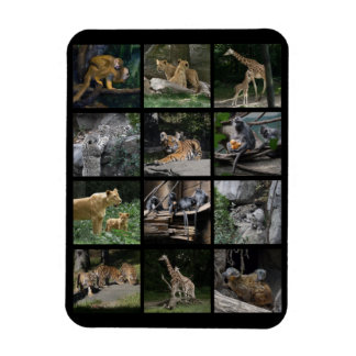 Animal Baby Collage Magnet