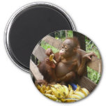 Animal Baby Food 2 Inch Round Magnet